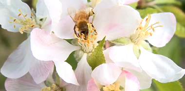 plant-bees-img